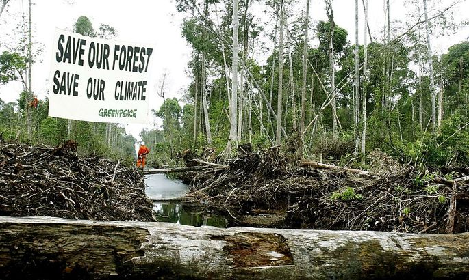 INDONESIA FOREST GREENPEACE CAMPAIGN
