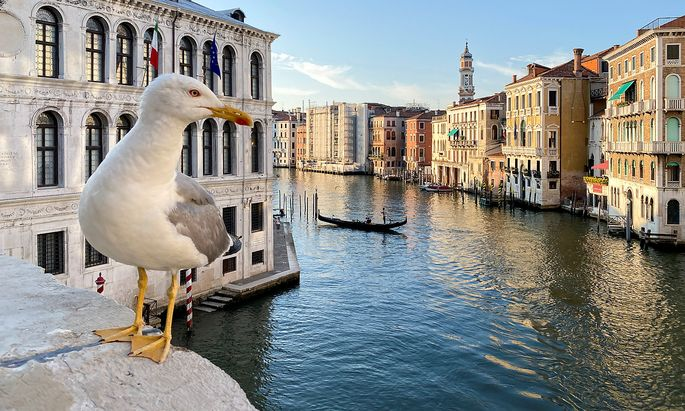 A seagull is seen in Grand Canal, amid the coronavirus disease (COVID-19) outbreak, in Venic