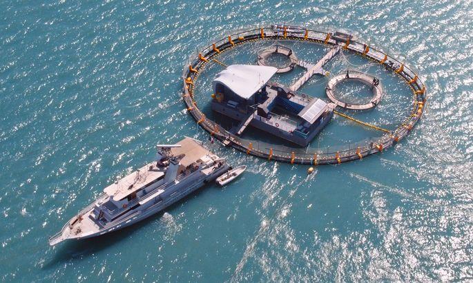 In einem Rettungsgehege soll der Vaquita überleben, bis sein Lebensraum, der Golf von Kalifornien, frei von illegalen Netzen ist. Nur: Diese Walart verträgt keine Gefangenschaft.