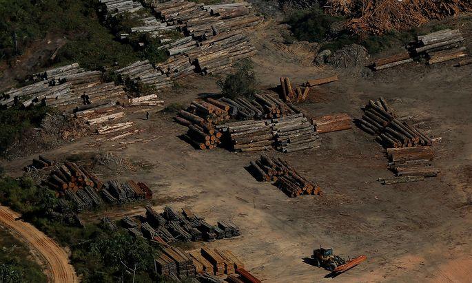 Der Amazonas wird immer kleiner. Grund sind der Bedarf an Holz und Weideflächen.