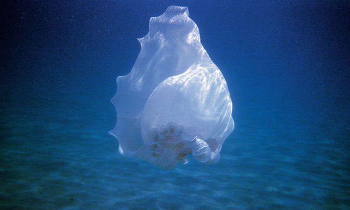Marko Zinks Muschelkleid aus der Unterwasser-Fotoserie