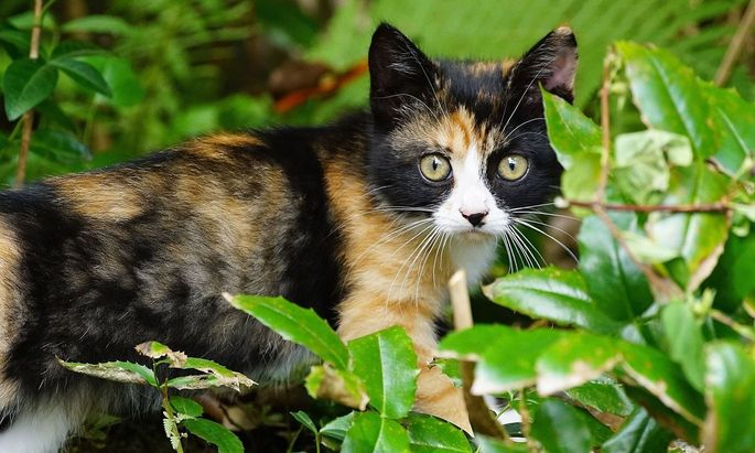 Katzen können sehr wohl ein Stück weit erzogen werden – und im Garten sehr nützlich sein.