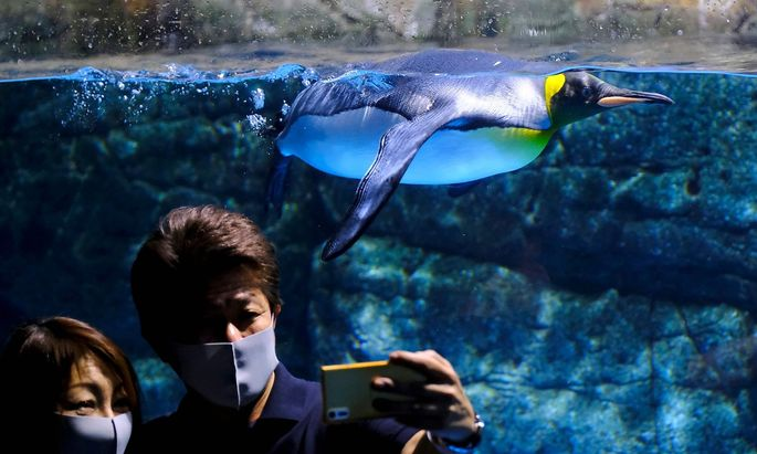 Der Hakkeijima Sea Paradise Themenpark in Yokohama eröffnete nach zwei Monaten Corona-Sperre am Montag erstmals wieder seine Tore für Besucher.