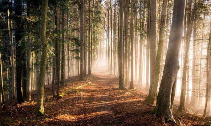 Die überdurchschnittlich intensive Bewirtschaftung macht den Wald anfällig für die Folgen der Klimakrise.
