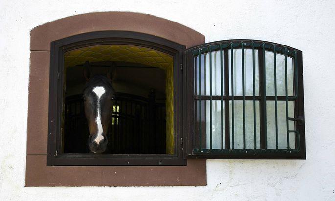 Auch Pferde müssen immer wieder zum Arzt. Die EU will, dass in Österreich der Berufsschutz für Tierärzte gelockert wird.