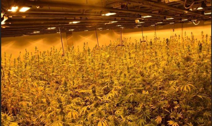 Eine Halle im Bezirk Wiener Neustadt wurde zum Cannabis-Anbau genutzt