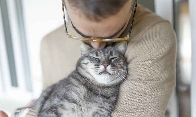 Gegen Katzenallergie