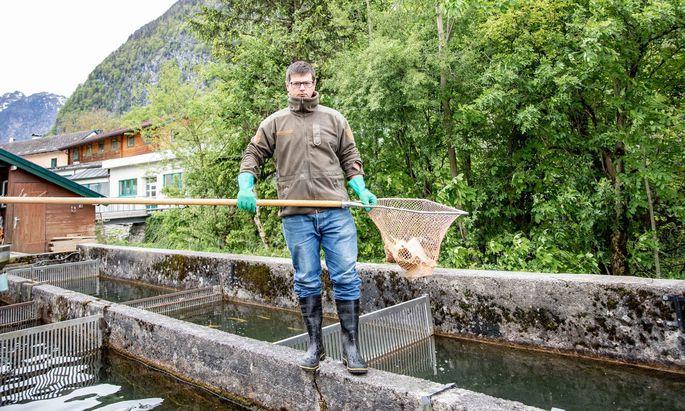 Alexander Gruber am Fischbecken in Golling bei Salzburg. Mit seinem Partner hat er einen Teil davon von Siegfried Schatteiner – quasi dem Vater des Bluntausaiblings – übernommen. Und geht neue Wege, unter anderem mit einem Onlineshop.