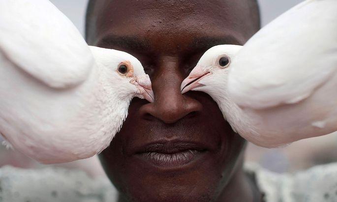 Symbolbild. Ein kubanischer Taubenzüchter präsentiert seine Prachtexemplare.