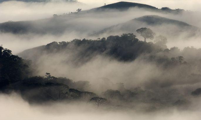 """Bäume sind """"umgekehrte Wasserfälle"""", die sich in Tropenwäldern – hier einem in Panama – viel Regen selbst machen."""