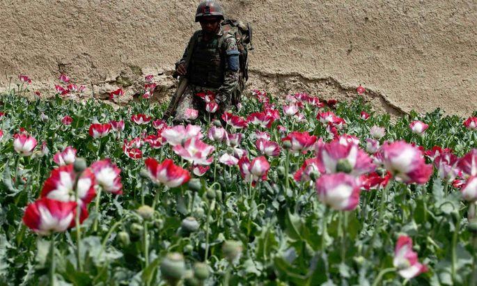 Afghanistan: Noch nie gab es so viele Anbauflächen von Schlafmohn.