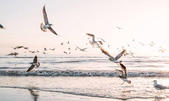 Seit 15 Jahren fährt Payr an die Küste Floridas, wo auch dieses Bild entstand. Heuer widmet sich die Bloggerin Zielen in Österreich.
