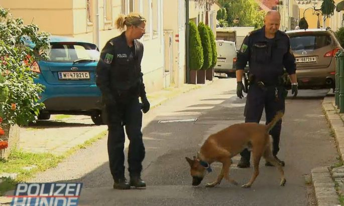 """ATV arbeitet für Formate immer wieder mit der Polizei zusammen. Etwa für die Doku-Soap """"Polizeihunde - Verbrecherjagd mit Biss!"""" (im Bild)."""