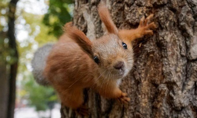 mann aß eichhörnchen  und starb  diepresse