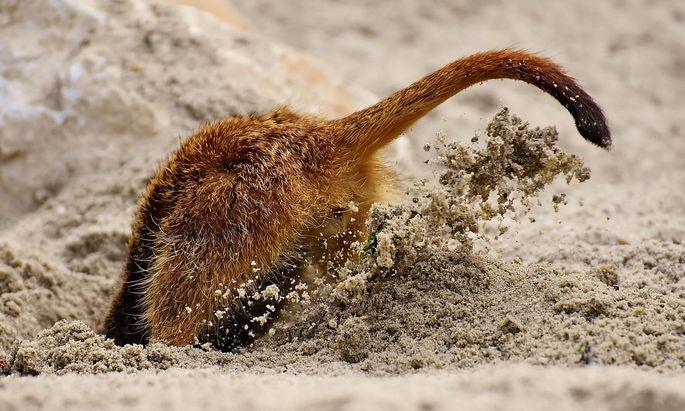 Kopf in den Sand oder aktiv um die wichtigsten Fixkosten kümmern.