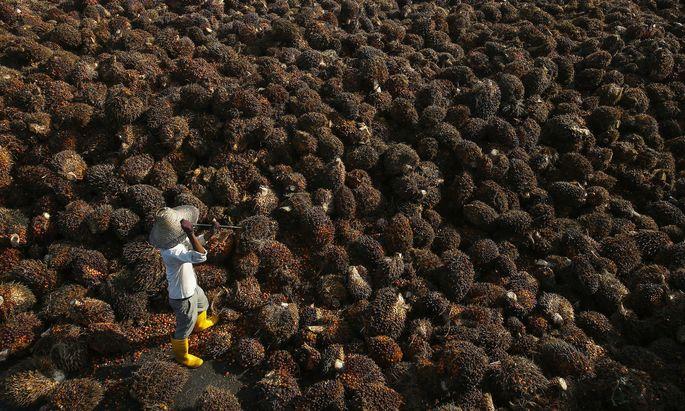 Palmöl steht in der Kritik, es geht um Regenwälder und Orang-Utans. Aber gibt es ökologisch sinnvolle Alternativen?