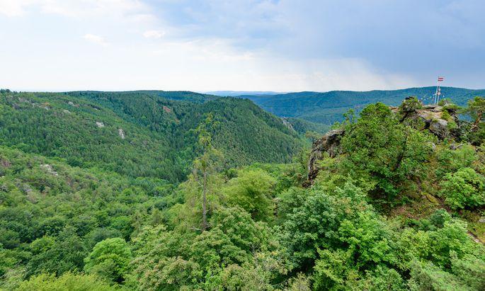 Blick vom Schanzriedel: Ein vielfältiger, ans Klima angepasster Mischwald ist das Ziel – weil er widerstandsfähiger ist als Monokulturen.