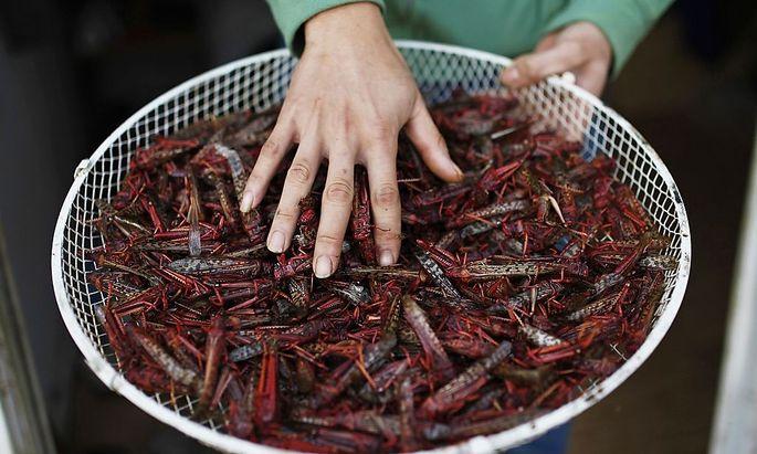 Ein thailändischer Arbeiter verkauft geröstete Heuschrecken in Israel.