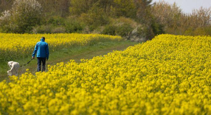 Ein Mai in voller Blüte - auch die Wirtschaft blüht auf.