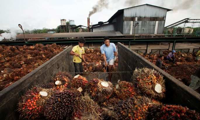 Vor allem in Indonesien und Malaysia wird Palmöl für Europa hergestellt. Pro Jahr werden dafür 1,6 Mio. Hektar Ackerfläche verwendet.