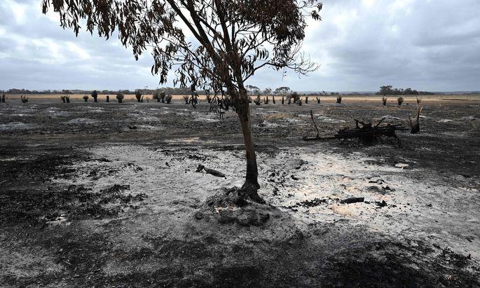 Medien aus aller Welt berichteten über Australiens Buschfeuer.