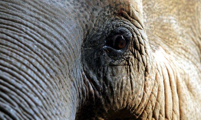 Dies ist nicht der Elefant des Kalifen.