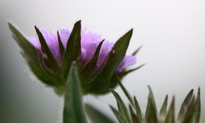 Die meisten Wiesenblumen sind grazile Schönheiten.