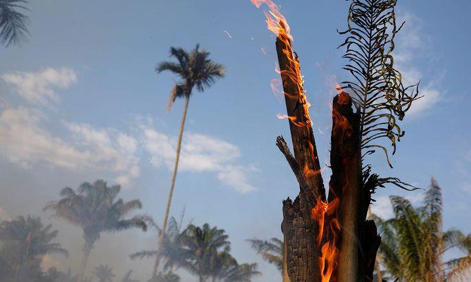 Große Flächen des brasilianischen Urwalds stehen in Flammen.
