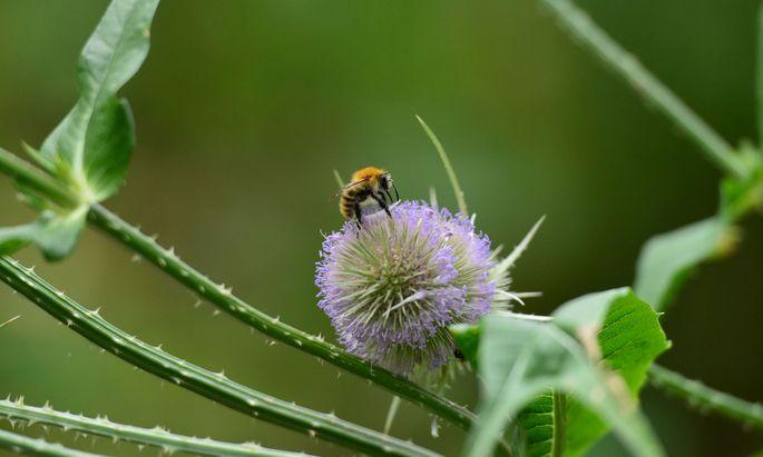 Bienenfreundlich zu gärtnern ist eigentlich einfach.