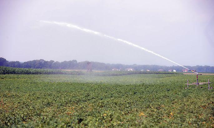 Für die Landwirtschaft wird die Hitze und die Trockenheit zunehmend zur Belastung. Im Bild die künstliche Bewässerung eines Feldes in Absdorf.