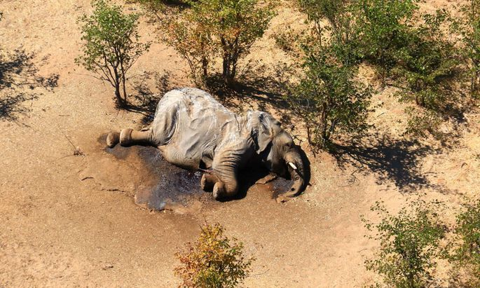 Hunderte Elefanten sind bereits verendet, Erklärung dafür gibt es noch keine