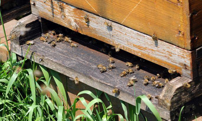 Emsige Bienen, guter Honig ist hierzulande nicht schwer zu bekommen.