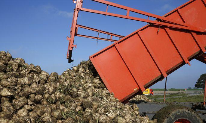"""Zuckerrüben anbauen, um Häuser zu heizen? Künftig soll das """"grüne Gas"""" allein aus Bioabfällen kommen."""