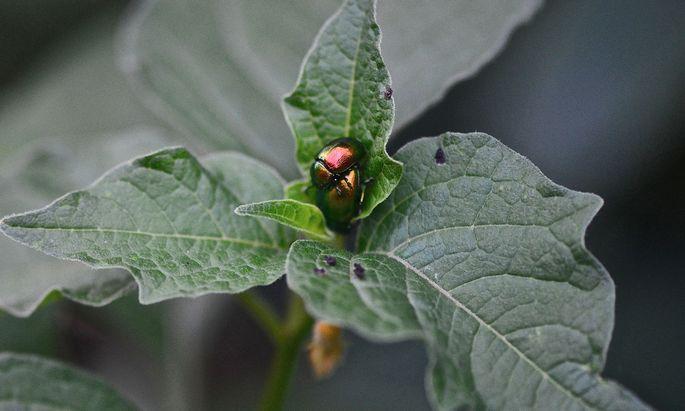 Wir mögen sie oft nicht, aber wir brauchen sie: Insekten.