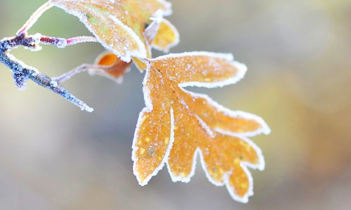 Die erste Frostnacht taucht den Garten in einen anderen Aggregatzustand.