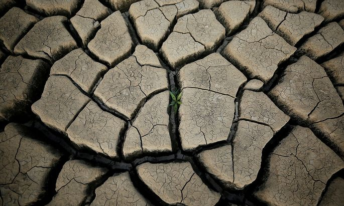 FILE PHOTO: A plant grows between cracked mud in a normally submerged area at Theewaterskloof dam near Cape Town