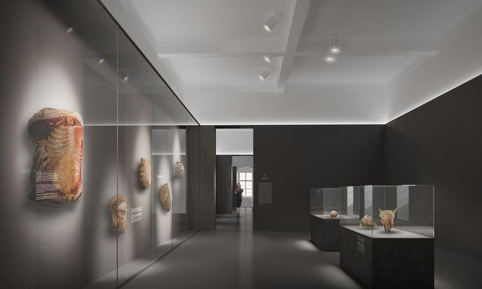 So sollen die Räumlichkeiten des Josephinums in der Währinger Straße aussehen, wenn das Museum im Frühjahr 2021 wieder eröffnet wird.