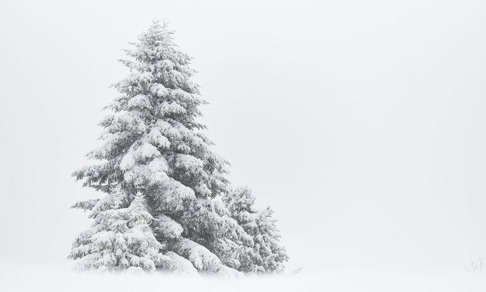 """""""Der kleine Tannenbaum"""" ist eine Geschichte, die ganz weihnachtlich stimmt."""