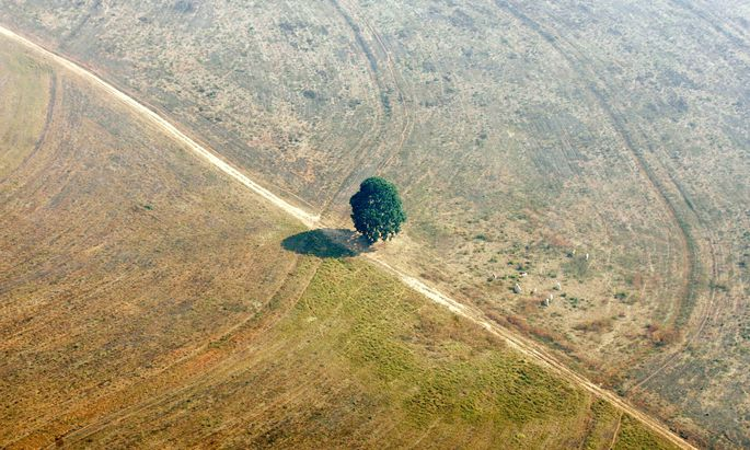 Der Amazonas, die größte grüne Lunge der Erde, schrumpft so schnell wie selten zuvor..