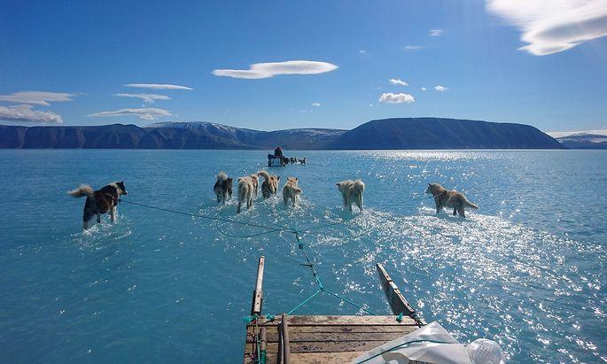 Die Hunde ziehen den Schlitten über das Wasser, sie laufen auf dem Eis, das von einer Schicht Schmelzwasser verdeckt ist.