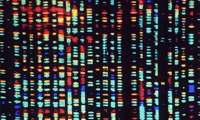 Neudefinierung des Individuums: Computeranalyse des menschlichen Erbguts.
