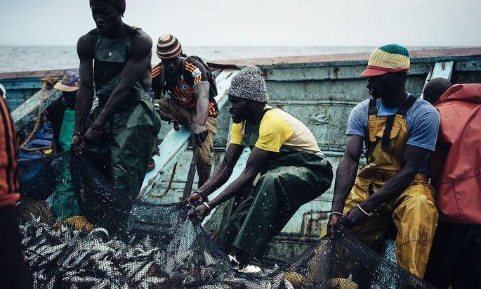 Lokale Fischer im Senegal holen sich auch jene kleineren Fischarten aus dem Wasser, die in großem Stil zu Fischmehl verarbeitet werden.