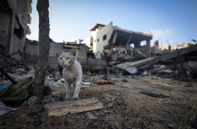 Ein zerstörtes Haus im Gazastreifen.