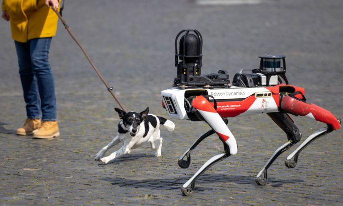 Ein Roboter des Sicherheitsdienstleisters Ciborius mit hundeähnlichen Bewegungen, künstlicher Intelligenz und 360-Grad-Kamera.