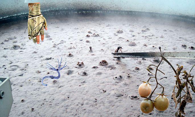 Gold oder Ekel? Der Klärschlamm verunsichert – hier in einer Collage.