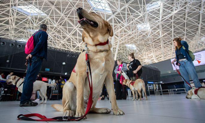 Unter den Reisenden befinden sich am Flughafen Helsinki jährlich mehr als 10.000 Hunde.