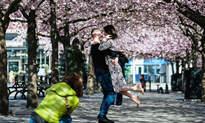 Liebestanz unter den Kirschblüten auch in der Coronazeit. Schweden tickt anders.