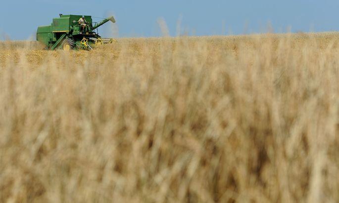 Weizen ist auf dem Weltmarkt teurer als vor der Krise.