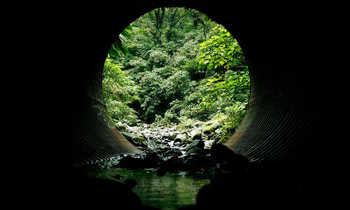 Die moderne Waldforschung liefert Erklärungen dafür, warum der Wald für viele ein Sehnsuchtsort ist.