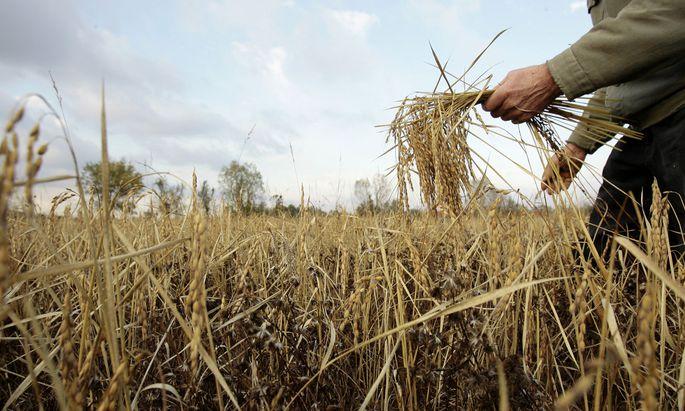 In den USA machen tausende Krebskranke Monsanto für ihr Leiden verantwortlich.